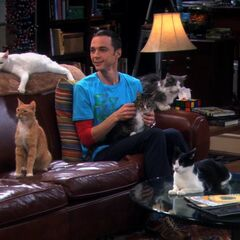 Sheldon and his cats.