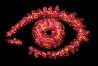 BBUK11 Eye