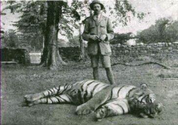 The-Champawat-Tigress-520x366