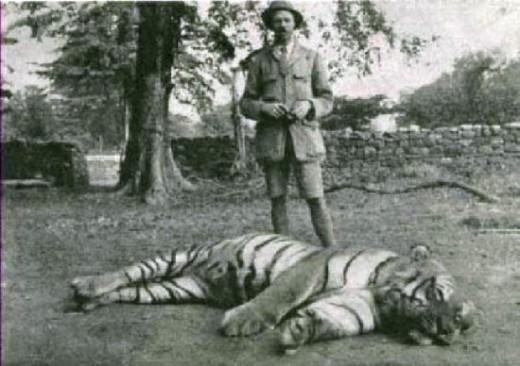 File:The-Champawat-Tigress-520x366.jpg