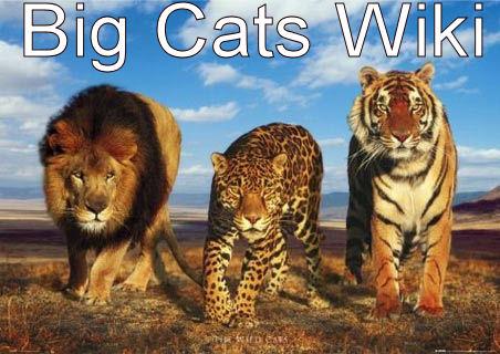 Bigcatswiki