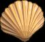 Muscheln-icon-0