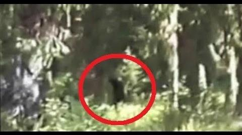 Bigfoot Family Filmed In Blue Mountains -Paul Freeman-