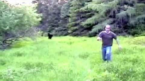 prince edward island bigfoot sighting bigfoot sightings wikia