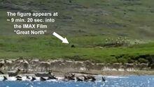 Great North Sighting