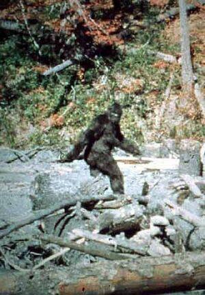 Bigfoot main image