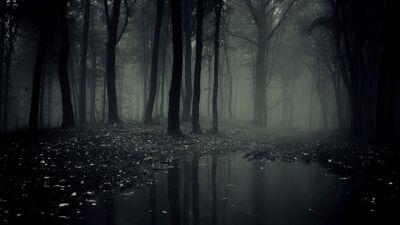 Swampz