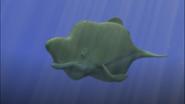 WhalePistachio