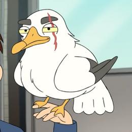 Piper the Pelican