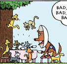 Spitsy having a tea party with 8 cats