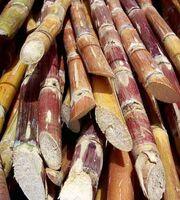 Cut sugarcane-1-