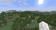 Birch forest1