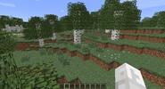 Birch forest2