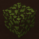 Mangrove 7
