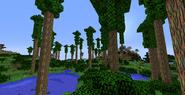 Eucalyptus Forest 1.8