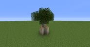 MangroveTree03