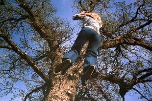 JaimesMother treeleap