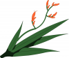 Harakeke Plant