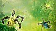 Totenkopfspinnen