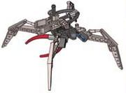 Fenrakk-poikashämähäkki