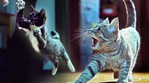 Kittens On The Beat