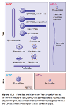 革兰氏阴性菌感染_病毒的结构和分类 | 生物学竞赛辞典 维基 | FANDOM powered by Wikia