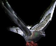 Pigeon Model render