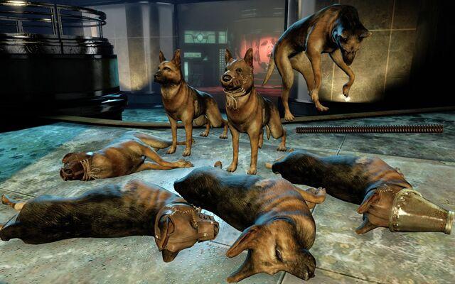 File:DogsBaSE2.jpg
