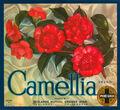 Camellia-brand-oranges.jpg