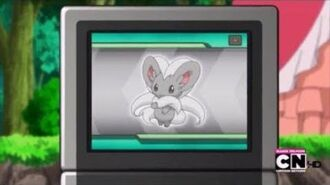 Cinccino Pokédex Entry
