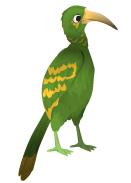 Calao de pico verde