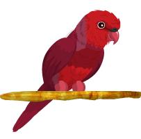 Loriquito Rojo