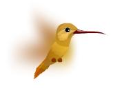 Colibri Marrón