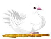 Paloma mensajera2