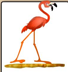 Flamenco Americano BirdLand