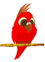 Perico rojo