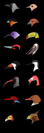 BirdBeaks