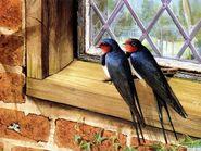 Couple Swallows