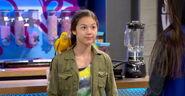 DML; Paige's Parakeet