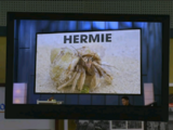Her, Me, and Hermie/Gallery