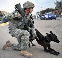 Police soldier with dog