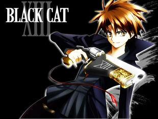 Black-Cat-black-cat-