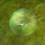 Flock Symbol