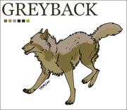 Greyback