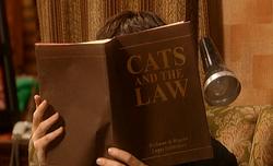 CatsATL