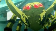 Spinnen-Gastrea 3