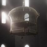 Vanessa's cage