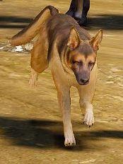 File:Shepperd dog.jpg