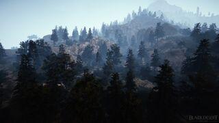 Tungrad Forest