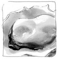 Volume 66 Intro Image